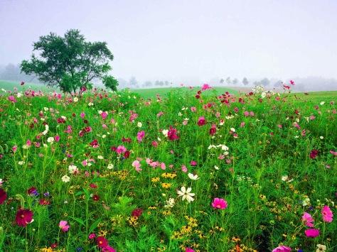 spring_season